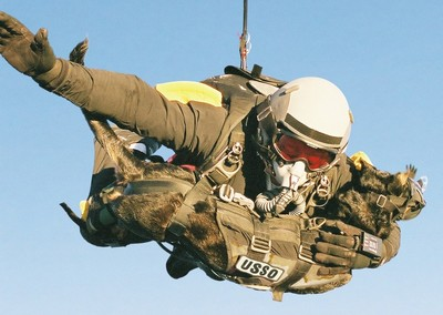 skydiving_dog_11